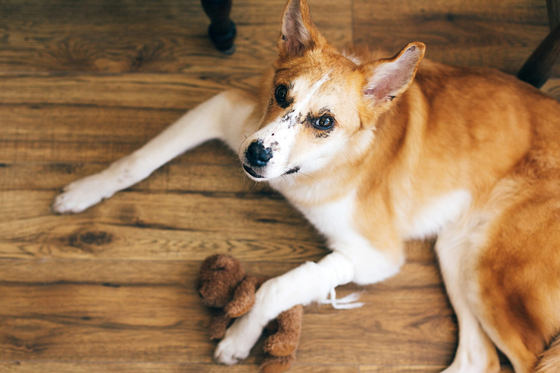 Treat Dog Hot Spots in every stage