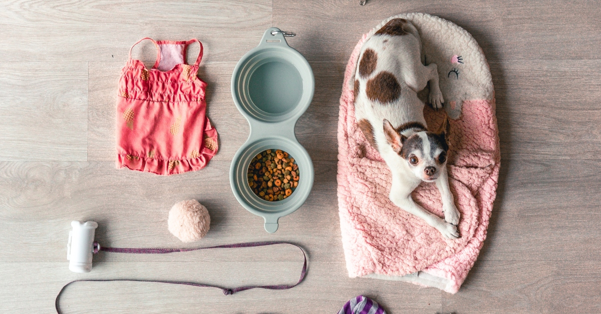 pet accessories to clean